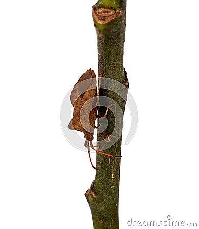 Bug on a twig