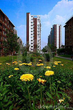 Building with Chrysanthemum