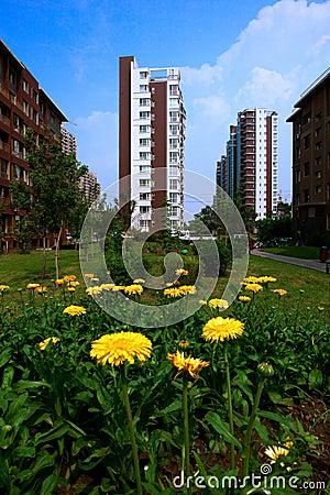 Building with Chrysanthemum