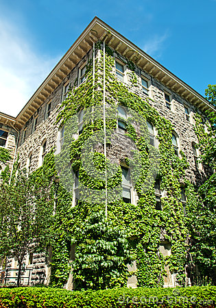 Building covered in ivy