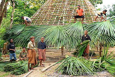 Building a traditional hut in West Timor Editorial Stock Image