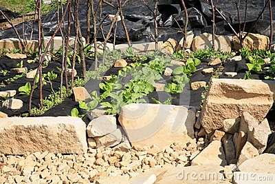 Building a vegetable and herb formal garden.