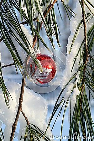 Buitensporige rode Kerstmisbal in een pijnboomboom