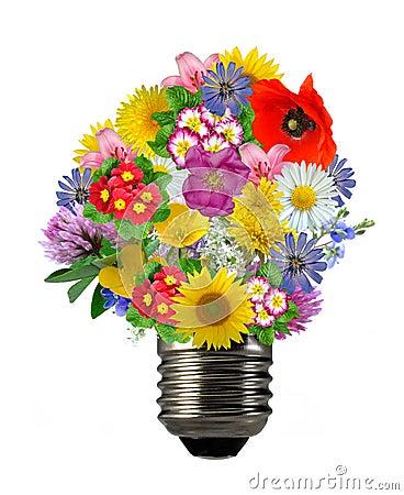 Bulb flowers