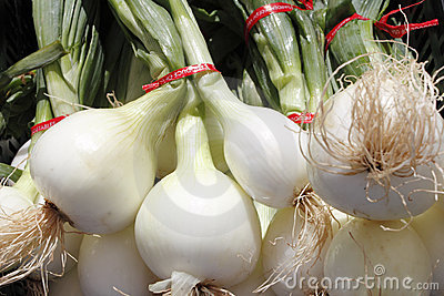 Bulb, white onions with tops.