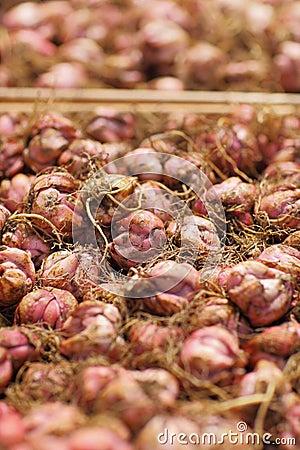 Bulbs on market