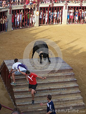 Bull in arena in Oropesa del mar Editorial Photography