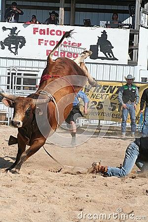 Free Bull Bucking 2 Stock Photos - 107090473