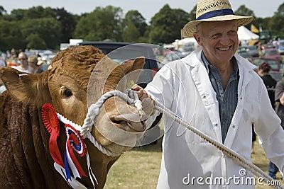 Bull premiada - demostración agrícola - Inglaterra Imagen de archivo editorial