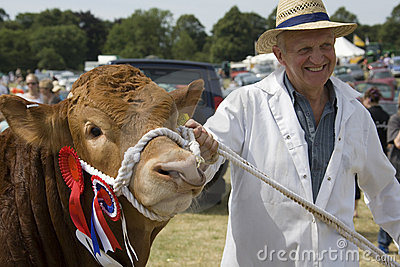 Bull premiato di conquista - fiera agricola - l Inghilterra Immagine Stock Editoriale