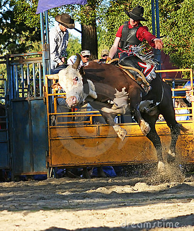 Free Bull Rider 1 Royalty Free Stock Photography - 220367