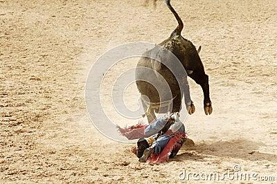 Bull riding 5