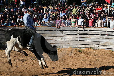 Bull rodeo Editorial Stock Image