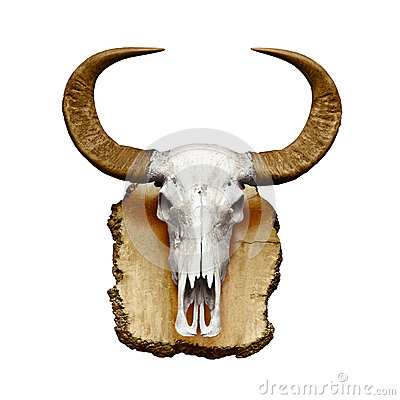 Bull skull with horns on white