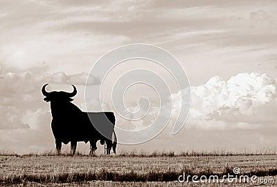 Bull of Spain