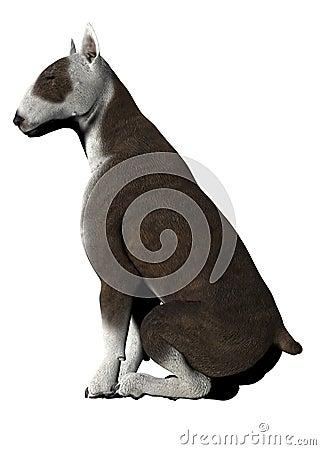 Bull Terrier - 01