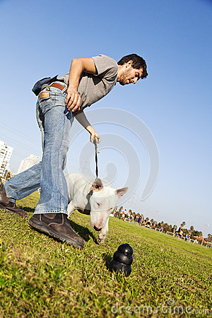 Bull Terrier Reaching for Chew Toy at Park
