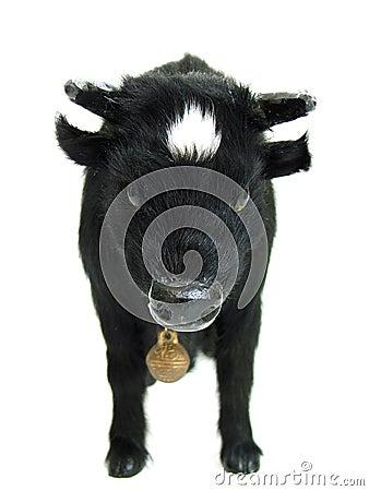 Bull02