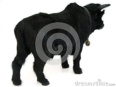 Bull03