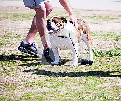 Bulldog and Friend