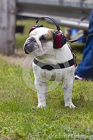 Bulldog Sports Fan