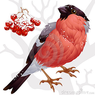 Free Bullfinch And Ashberry 2 Stock Photography - 16531852