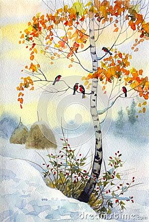 Bullfinch on the birch