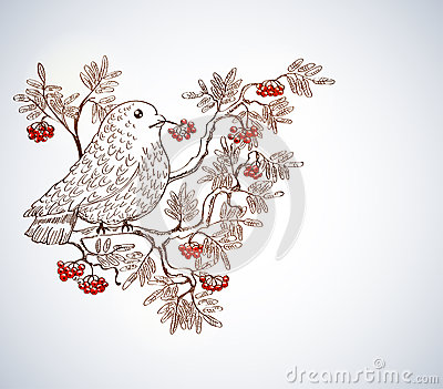 Bullfinch and mountain ash background