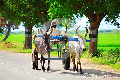 Bullock cart Editorial Photo