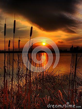 Free Bullrush Sunset Stock Photography - 6370622