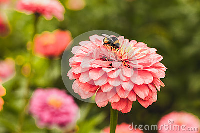 Bumble bee on flower