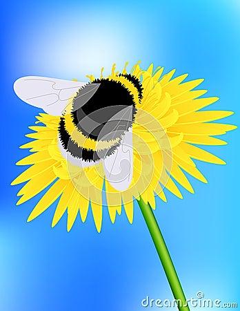 Free Bumblebee Stock Photo - 14561350
