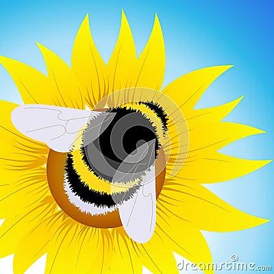 Bumblebee sitting on sunflower