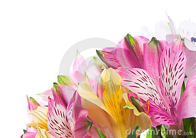 Bunch of alstroemeria flowers