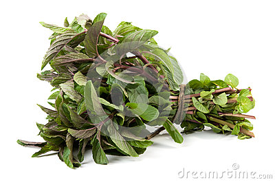 Bunch of basil isolated