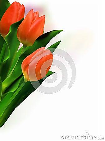 Bunch of beautiful tulips.