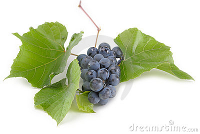 Bunch of Black Grapes on green leaf