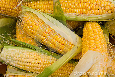 Bunch of corn on the cob