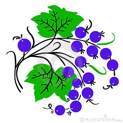 Bunch  currant. Ripe berry. Vector