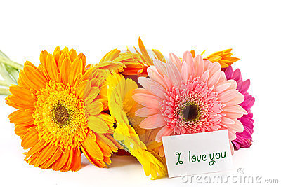 Bunch of different colored gerbera