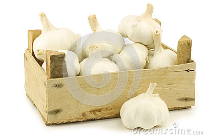 Bunch of dried whole garlic bulbs