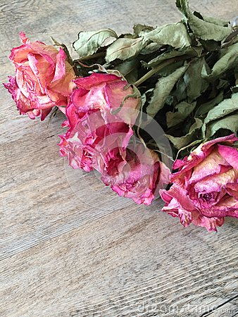 Bunch of dry pink roses