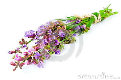 Bunch of flowering sage