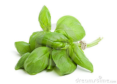 Bunch of fresh basil