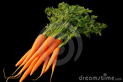 Bunch Of Fresh Carrots Royalty Free Stock Image - Image: 3367446