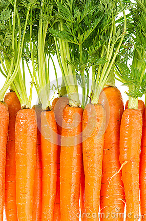 Bunch of fresh carrots over white