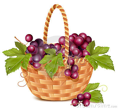 Bunch of fresh grape in the basket.