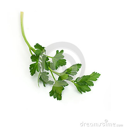 Bunch of Fresh green parsley
