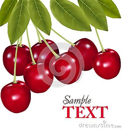 Bunch of fresh, juicy, ripe cherries. Vector