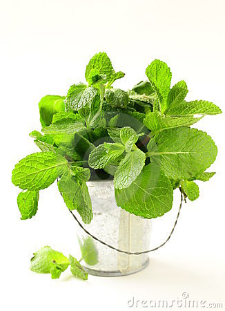 Bunch of fresh  mint on white background